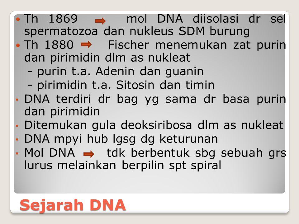 Sejarah DNA Th 1869 mol DNA diisolasi dr sel spermatozoa dan nukleus SDM burung Th 1880 Fischer menemukan zat purin dan pirimidin dlm as nukleat - pur