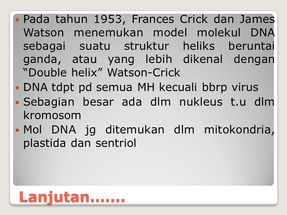 Lanjutan....... Pada tahun 1953, Frances Crick dan James Watson menemukan model molekul DNA sebagai suatu struktur heliks beruntai ganda, atau yang le