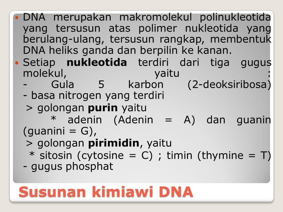Susunan kimiawi DNA DNA merupakan makromolekul polinukleotida yang tersusun atas polimer nukleotida yang berulang-ulang, tersusun rangkap, membentuk D