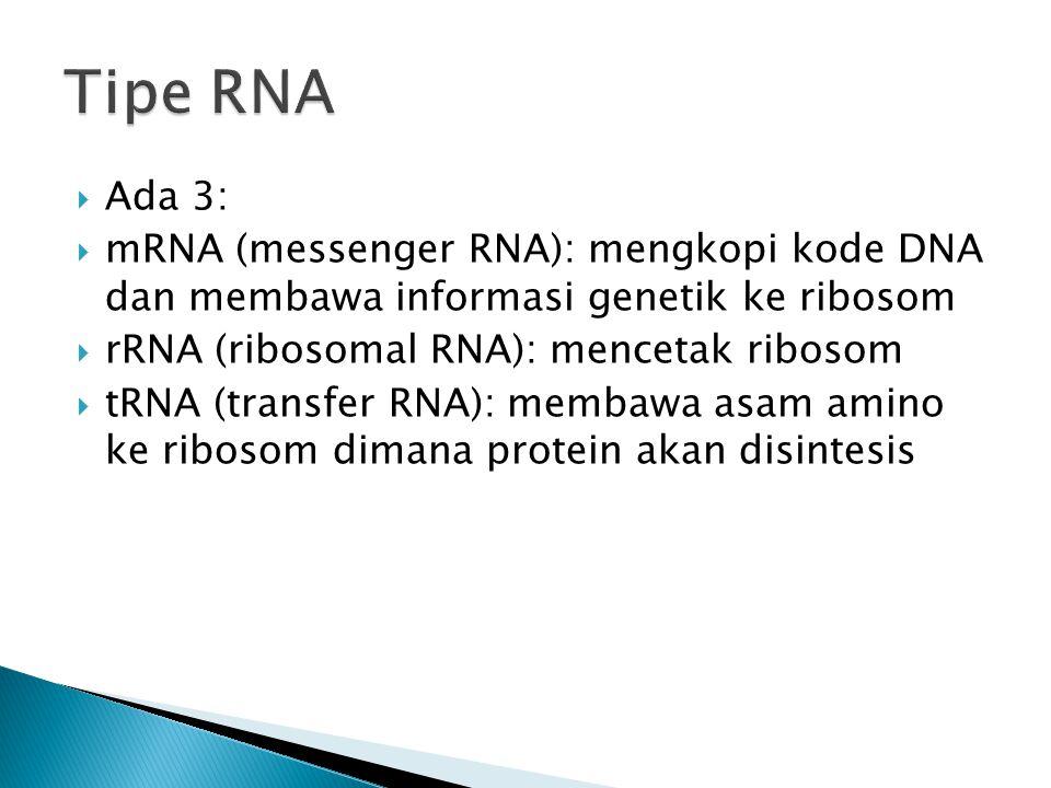  Ada 3:  mRNA (messenger RNA): mengkopi kode DNA dan membawa informasi genetik ke ribosom  rRNA (ribosomal RNA): mencetak ribosom  tRNA (transfer