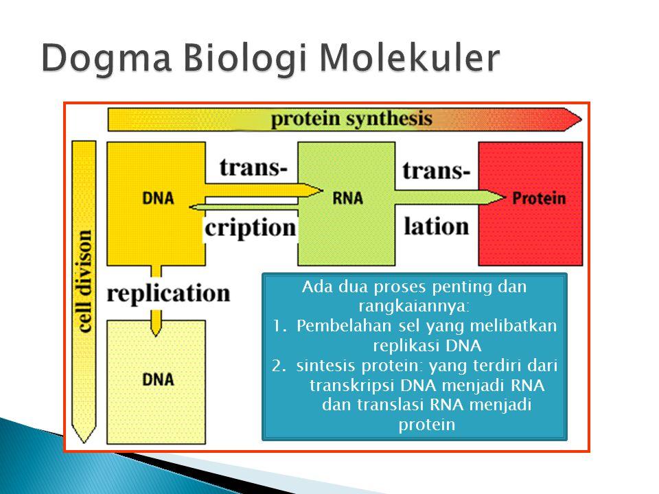 Ada dua proses penting dan rangkaiannya: 1.Pembelahan sel yang melibatkan replikasi DNA 2.sintesis protein: yang terdiri dari transkripsi DNA menjadi