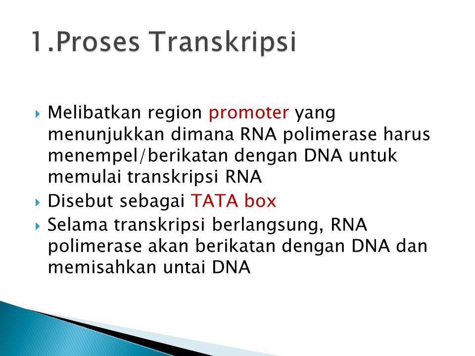  Melibatkan region promoter yang menunjukkan dimana RNA polimerase harus menempel/berikatan dengan DNA untuk memulai transkripsi RNA  Disebut sebaga