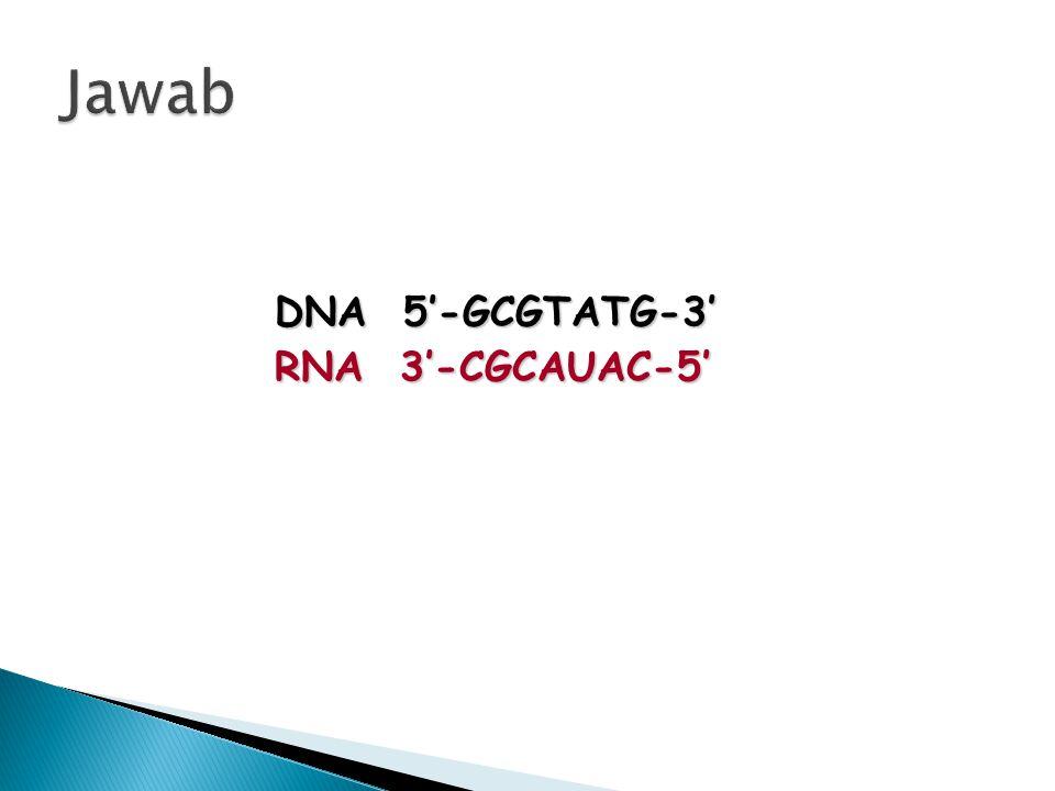 RNA 3'-CGCAUAC-5'