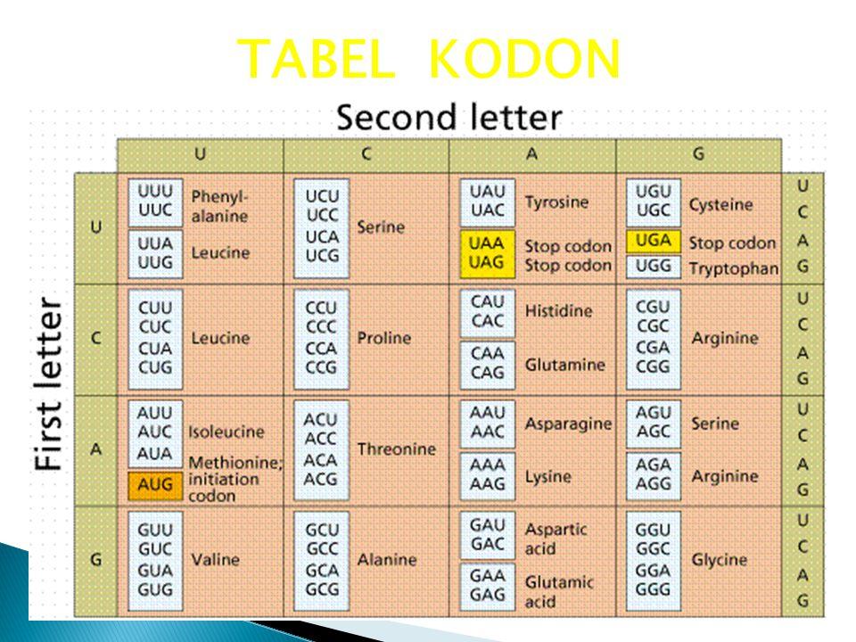 TABEL KODON