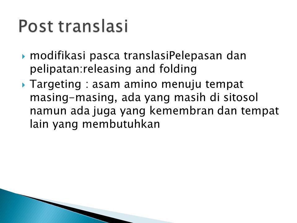  modifikasi pasca translasiPelepasan dan pelipatan:releasing and folding  Targeting : asam amino menuju tempat masing-masing, ada yang masih di sito