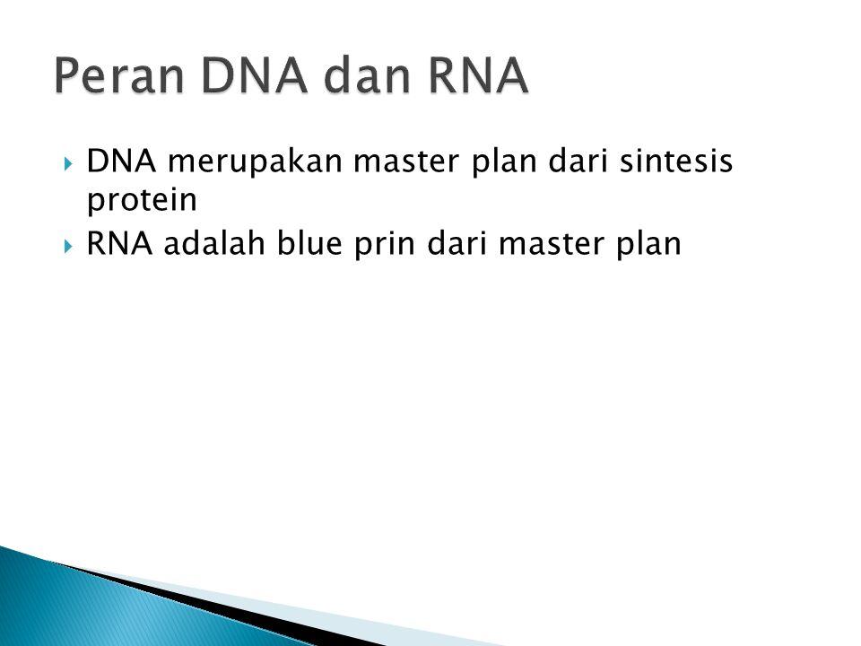 DNARNA Gula deoksiriboseGula ribose Mengandung basa Timin (T)Basa Urasil (U) Double-stranded (untai ganda)Single-stranded (tunggal)