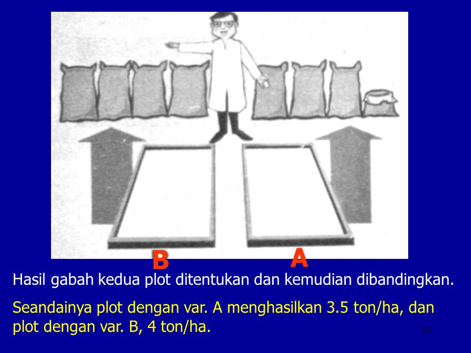 19 Hasil gabah kedua plot ditentukan dan kemudian dibandingkan. Seandainya plot dengan var. A menghasilkan 3.5 ton/ha, dan plot dengan var. B, 4 ton/h