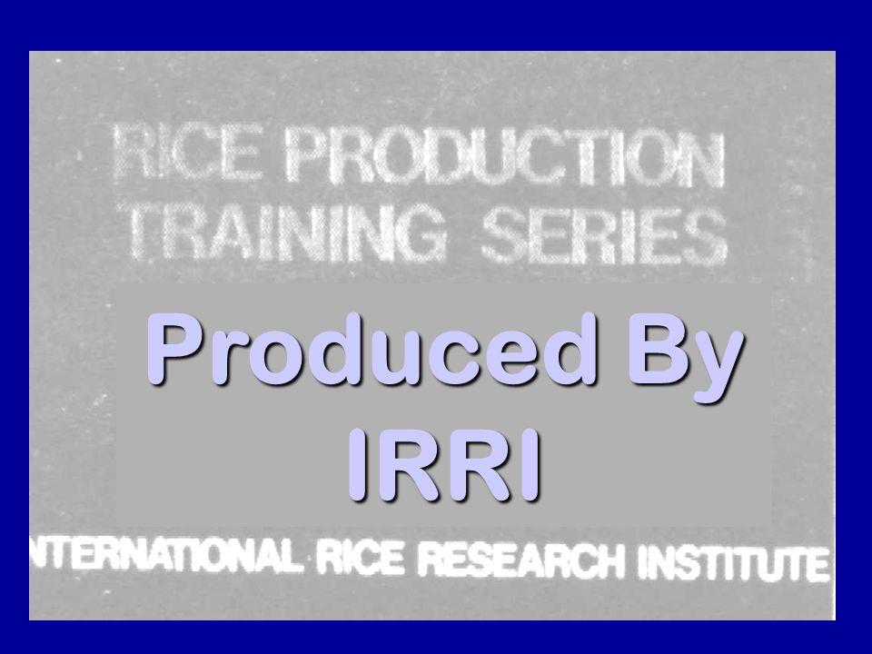 49 Produced By IRRI