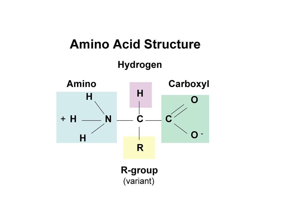Penggolongan asam amino berdasarkan rantai sampingnya 1.Polar, bermuatan negatif Ex: Aspartat, asam glutamat 2.Polar, bermuatan positif Ex: Arginin, histidin, lisin 3.Polar, tidak bermuatan Ex: Asparagin, glutamin, serin, treonin