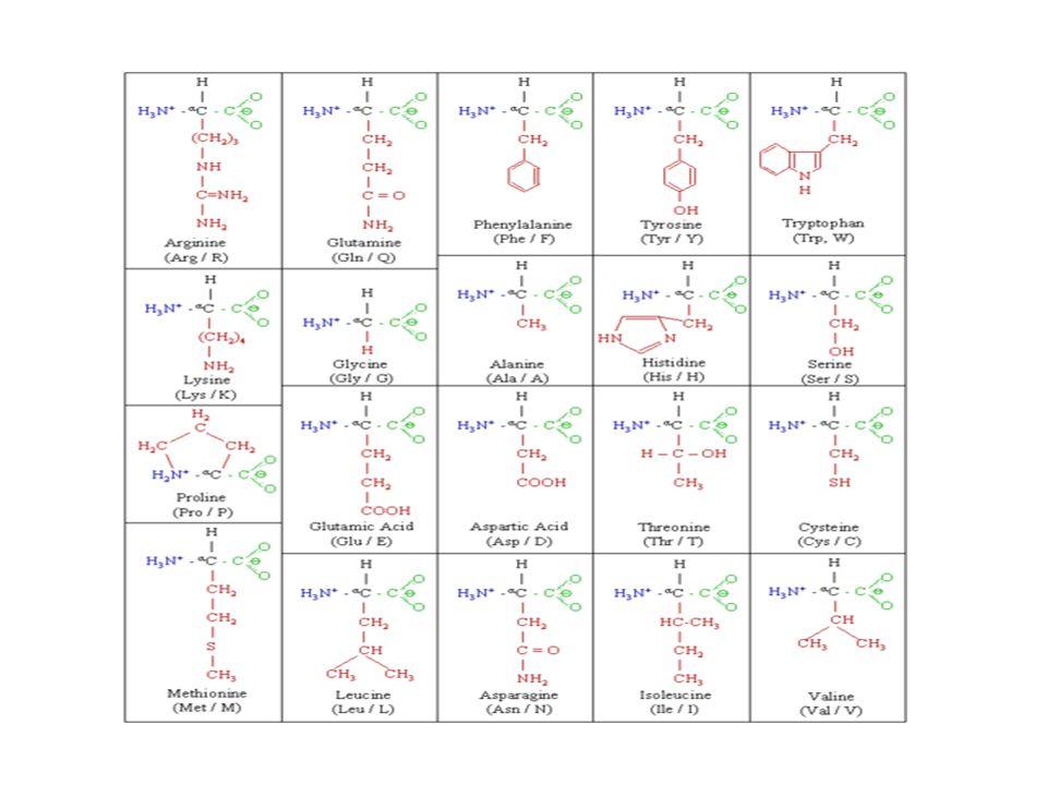 Struktur dan sifat peptida maupun protein sangat tergantung pada urutan asam amino dalam rantai peptida.