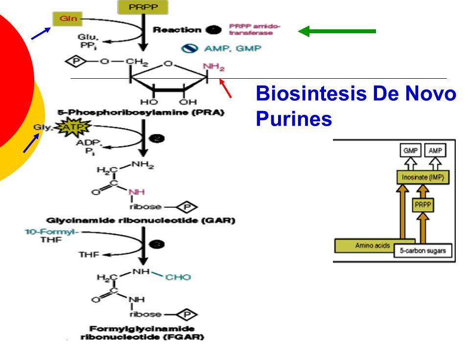 Biosintesis De Novo Purines