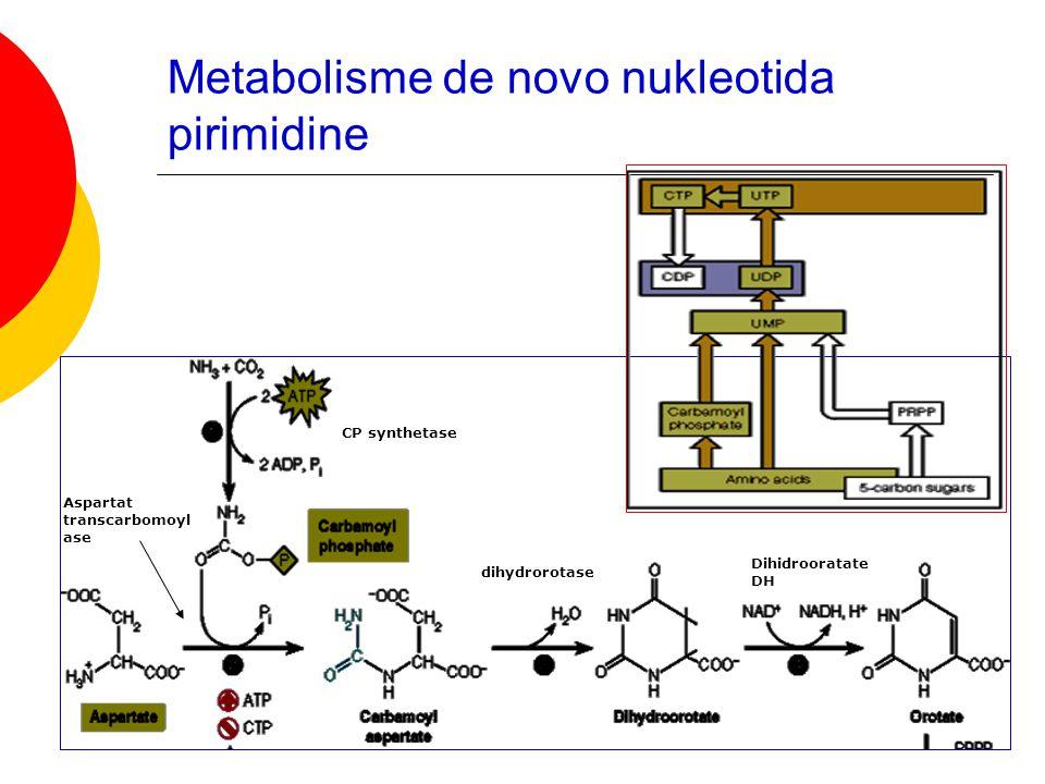 Metabolisme de novo nukleotida pirimidine CP synthetase Aspartat transcarbomoyl ase dihydrorotase Dihidrooratate DH