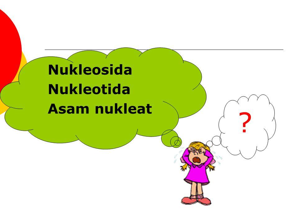 Nukleosida Nukleotida Asam nukleat ?