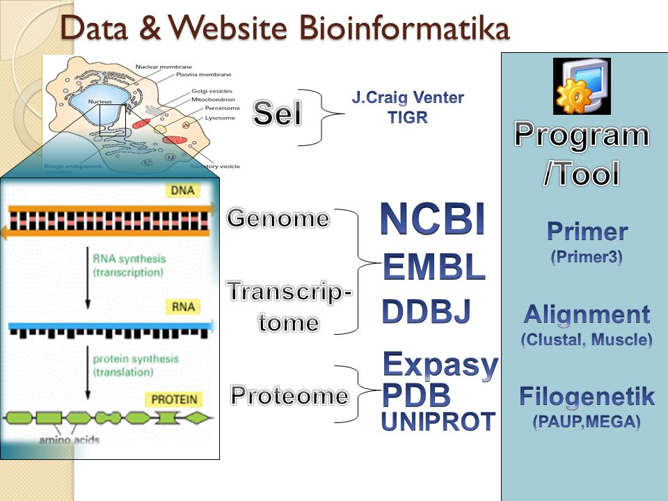 GENOME_TRANSCRIPTOME INSDC (International Nucleotide Sequence Database Collaboration): GenBankGenBank-NCBI (National Center Biotechnology Information- USA), EMBL-EBI EMBL-EBI (European Molecular Biology Laboratory - Europe Bioinformatic Institute- Inggris) DDBJ-CIB DDBJ-CIB (DNA Data Bank of Japan - Center for Information Biology - Jepang).
