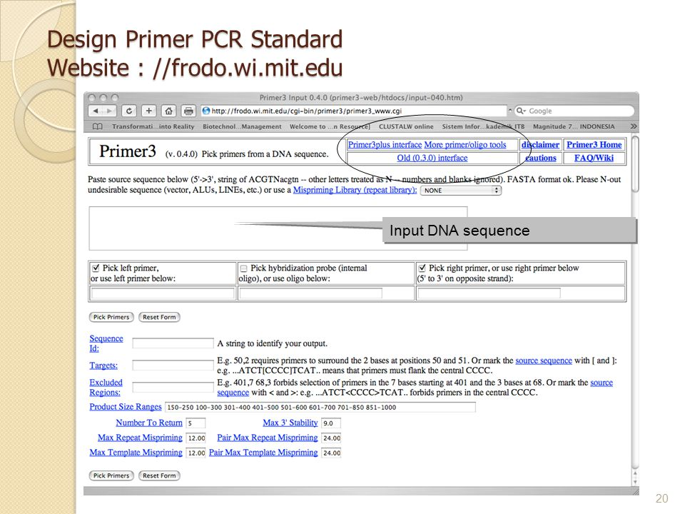 Design Primer PCR Standard Website : //frodo.wi.mit.edu 20 Input DNA sequence