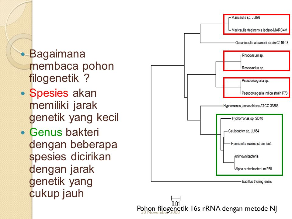 Bagaimana membaca pohon filogenetik ? Spesies akan memiliki jarak genetik yang kecil Genus bakteri dengan beberapa spesies dicirikan dengan jarak gene