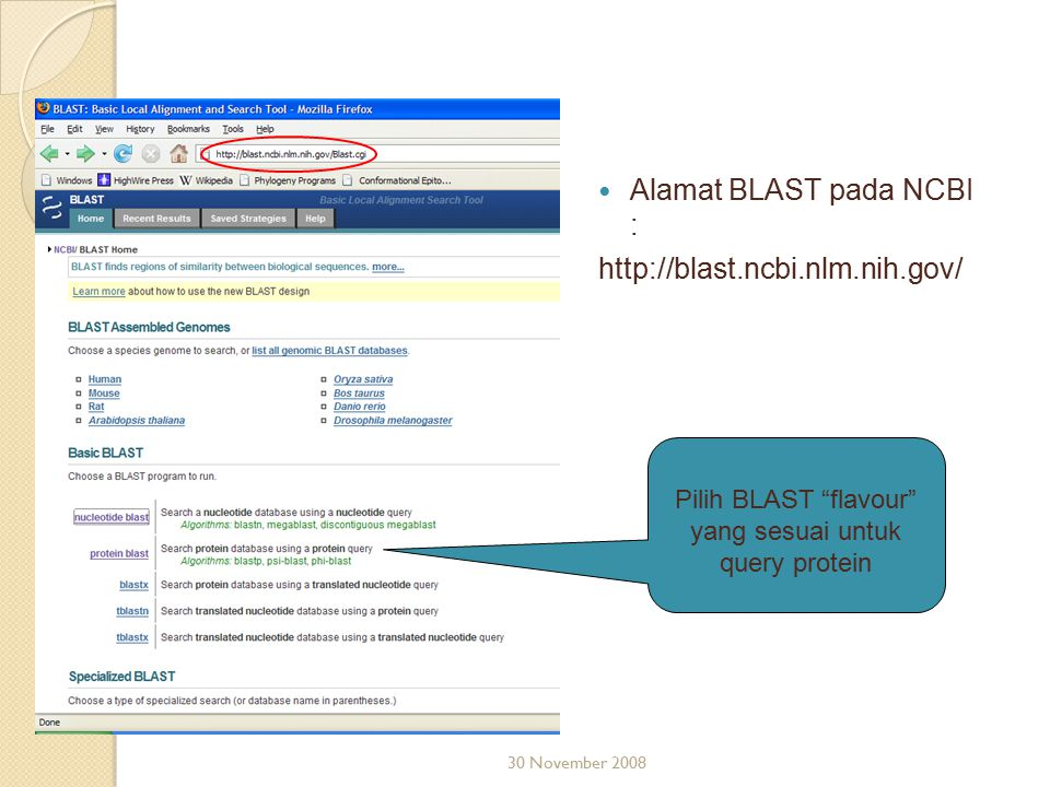 "Alamat BLAST pada NCBI : http://blast.ncbi.nlm.nih.gov/ 30 November 2008 Pilih BLAST ""flavour"" yang sesuai untuk query protein"
