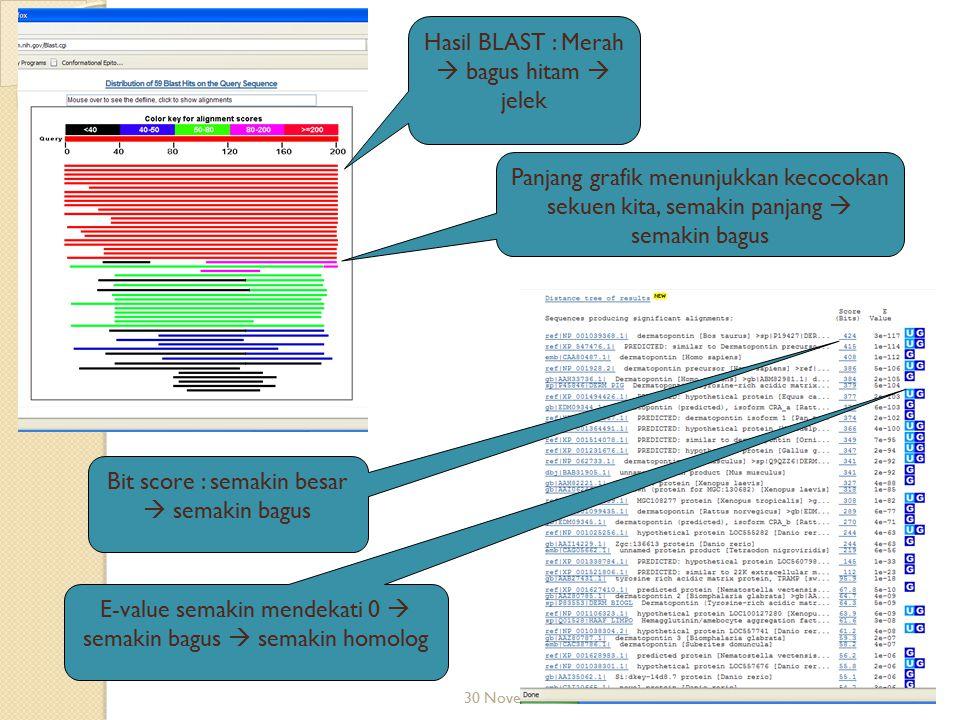 30 November 2008 Hasil BLAST : Merah  bagus hitam  jelek Panjang grafik menunjukkan kecocokan sekuen kita, semakin panjang  semakin bagus Bit score