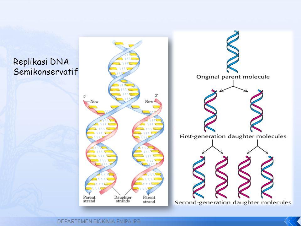 Replikasi DNA Semikonservatif DEPARTEMEN BIOKIMIA FMIPA IPB