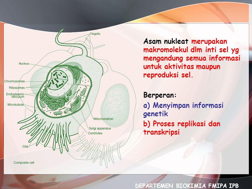 Asam nukleat merupakan makromolekul dlm inti sel yg mengandung semua informasi untuk aktivitas maupun reproduksi sel. Berperan: a) Menyimpan informasi