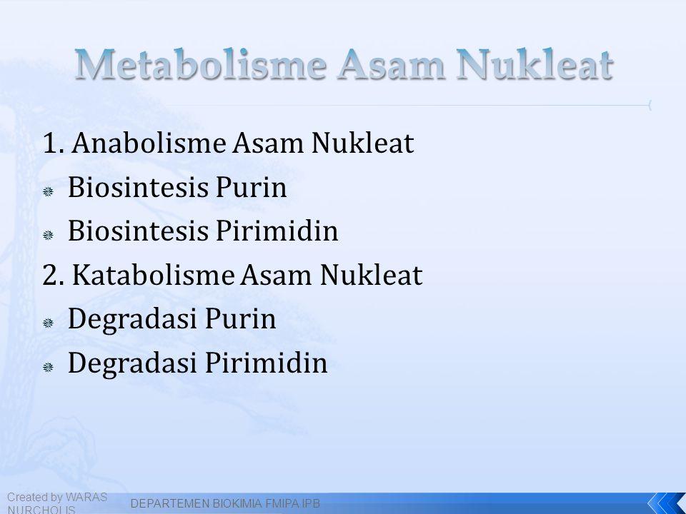 1. Anabolisme Asam Nukleat  Biosintesis Purin  Biosintesis Pirimidin 2. Katabolisme Asam Nukleat  Degradasi Purin  Degradasi Pirimidin Created by