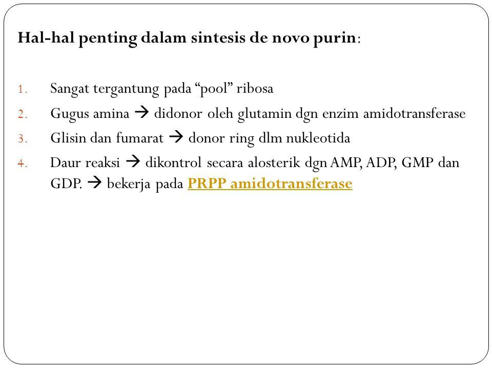 "Hal-hal penting dalam sintesis de novo purin: 1. Sangat tergantung pada ""pool"" ribosa 2. Gugus amina  didonor oleh glutamin dgn enzim amidotransferas"