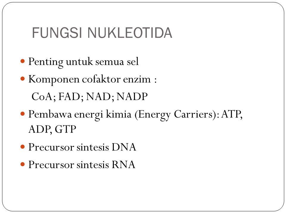 FUNGSI NUKLEOTIDA Penting untuk semua sel Komponen cofaktor enzim : CoA; FAD; NAD; NADP Pembawa energi kimia (Energy Carriers): ATP, ADP, GTP Precurso