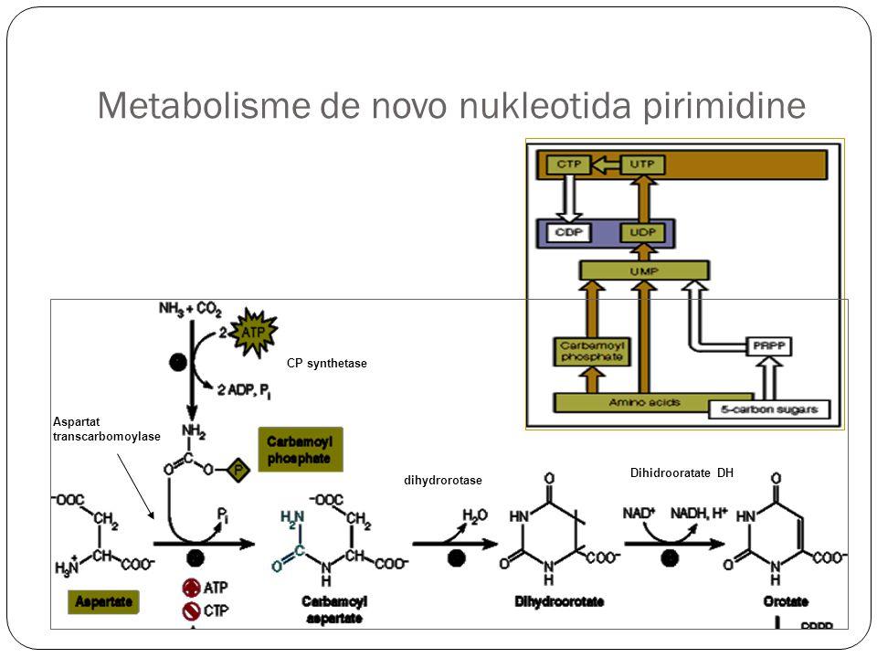Metabolisme de novo nukleotida pirimidine CP synthetase Aspartat transcarbomoylase dihydrorotase Dihidrooratate DH