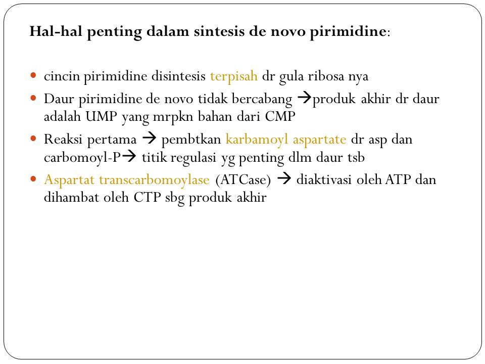 Hal-hal penting dalam sintesis de novo pirimidine: cincin pirimidine disintesis terpisah dr gula ribosa nya Daur pirimidine de novo tidak bercabang  produk akhir dr daur adalah UMP yang mrpkn bahan dari CMP Reaksi pertama  pembtkan karbamoyl aspartate dr asp dan carbomoyl-P  titik regulasi yg penting dlm daur tsb Aspartat transcarbomoylase (ATCase)  diaktivasi oleh ATP dan dihambat oleh CTP sbg produk akhir