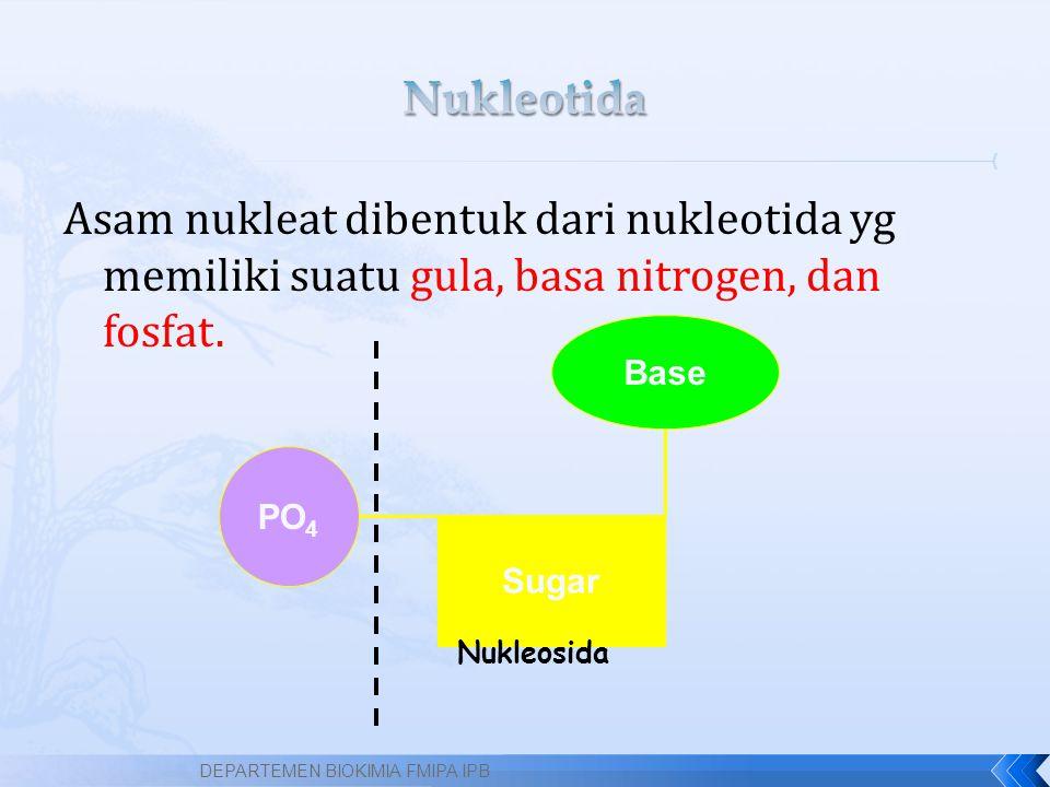 Asam nukleat dibentuk dari nukleotida yg memiliki suatu gula, basa nitrogen, dan fosfat. DEPARTEMEN BIOKIMIA FMIPA IPB Sugar Base PO 4 Nukleosida
