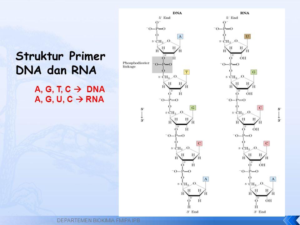 Struktur Primer DNA dan RNA A, G, T, C  DNA A, G, U, C  RNA DEPARTEMEN BIOKIMIA FMIPA IPB