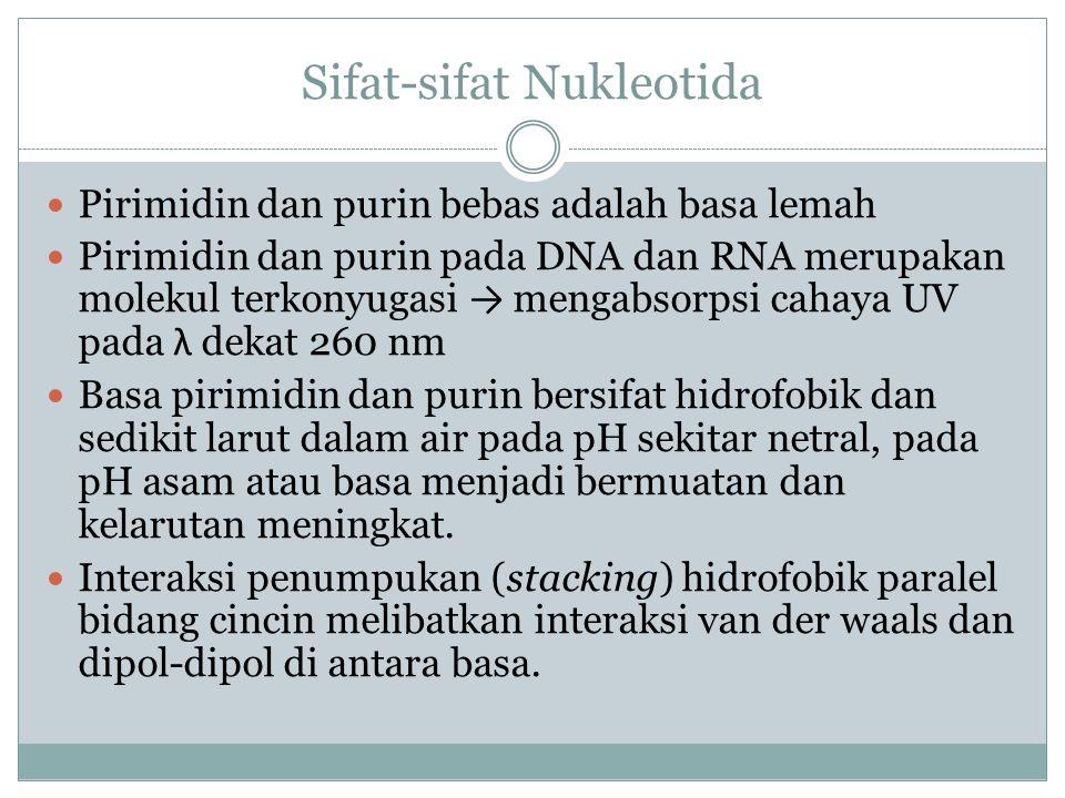 Sifat-sifat Nukleotida Pirimidin dan purin bebas adalah basa lemah Pirimidin dan purin pada DNA dan RNA merupakan molekul terkonyugasi → mengabsorpsi