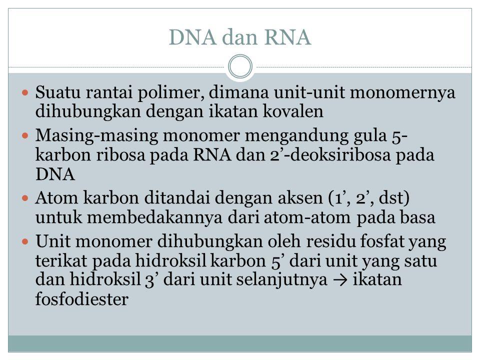 Pembentukan dimer pirimidin yang diinduksi sinar UV