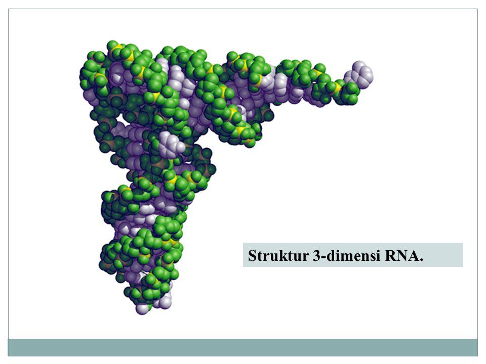 Struktur 3-dimensi RNA.