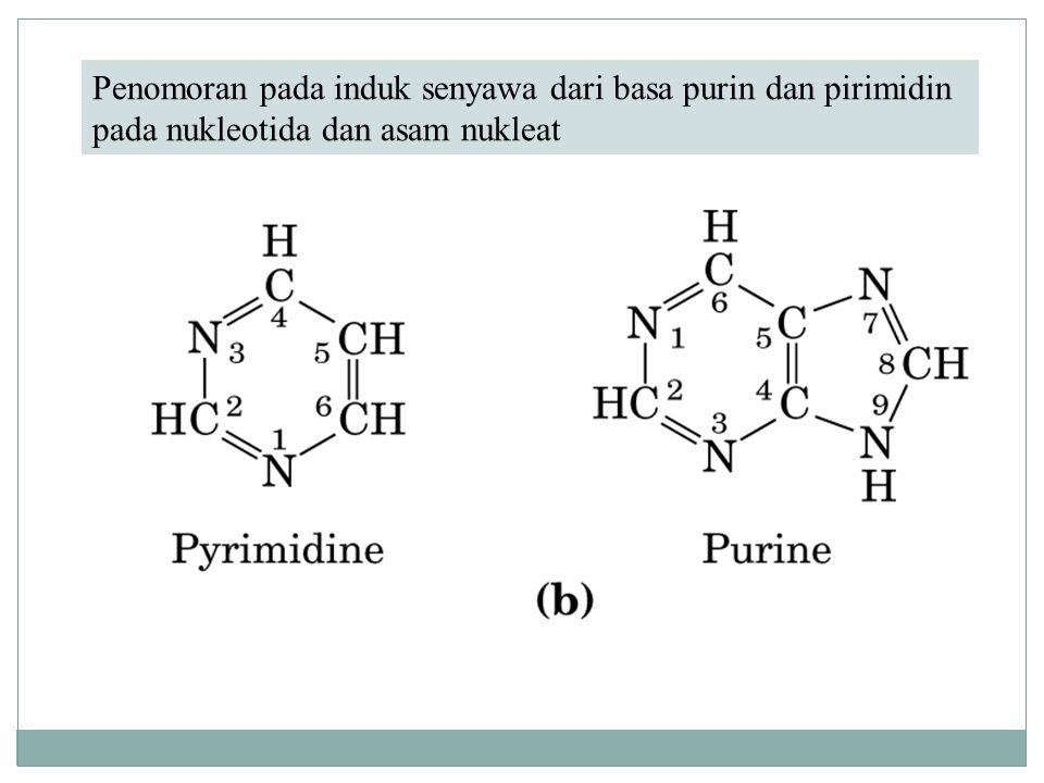 Other Functions of Nucleotides