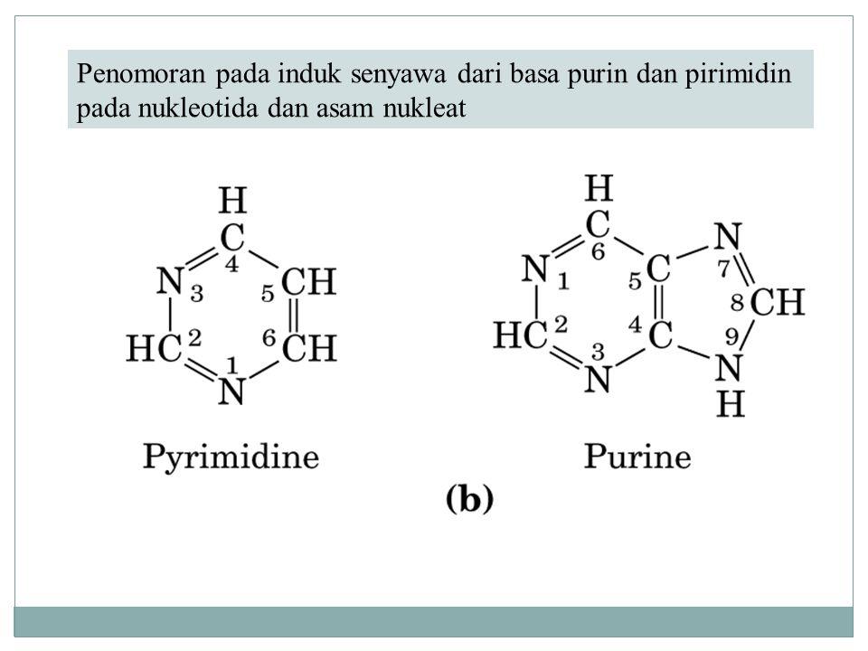 Basa-basa utama purin dan pirimidin dari asam nukleat.
