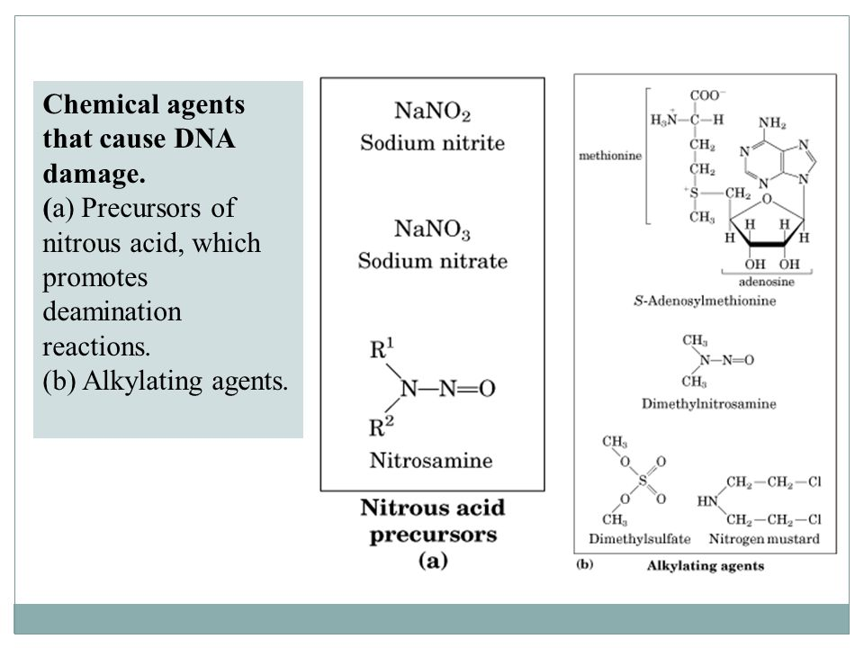 Chemical agents that cause DNA damage. (a) Precursors of nitrous acid, which promotes deamination reactions. (b) Alkylating agents.