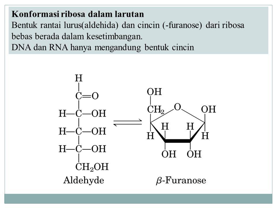 Konformasi ribosa dalam larutan Bentuk rantai lurus(aldehida) dan cincin (-furanose) dari ribosa bebas berada dalam kesetimbangan. DNA dan RNA hanya m