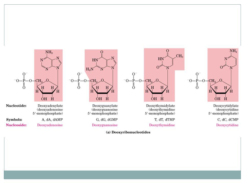 Hubungan antara tm dan kandungan GC pada DNA