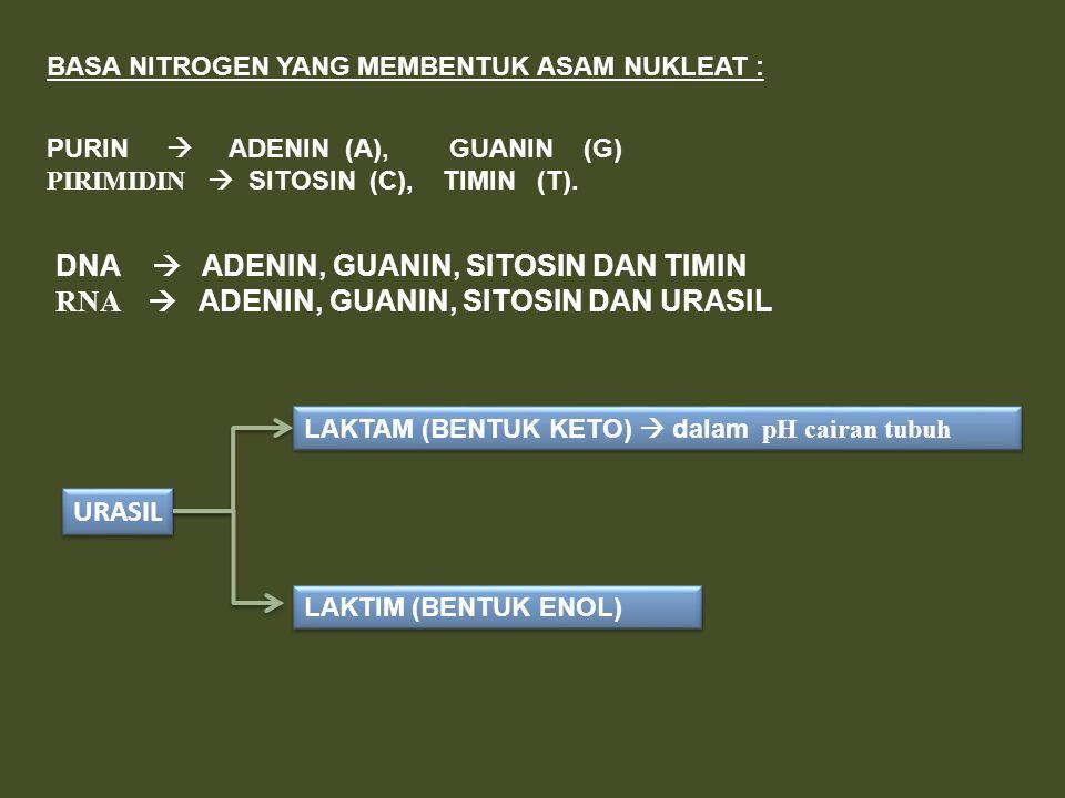 BASA NITROGEN YANG MEMBENTUK ASAM NUKLEAT : PURIN  ADENIN (A), GUANIN (G) PIRIMIDIN  SITOSIN (C), TIMIN (T). DNA  ADENIN, GUANIN, SITOSIN DAN TIMIN