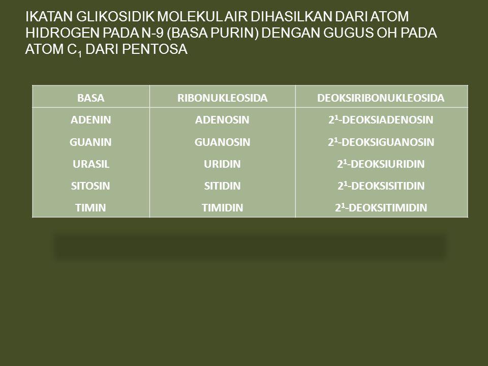 IKATAN GLIKOSIDIK MOLEKUL AIR DIHASILKAN DARI ATOM HIDROGEN PADA N-9 (BASA PURIN) DENGAN GUGUS OH PADA ATOM C 1 DARI PENTOSA