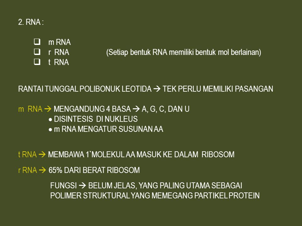 2.RNA :  m RNA  r RNA (Setiap bentuk RNA memiliki bentuk mol berlainan)  t RNA RANTAI TUNGGAL POLIBONUK LEOTIDA  TEK PERLU MEMILIKI PASANGAN m RNA