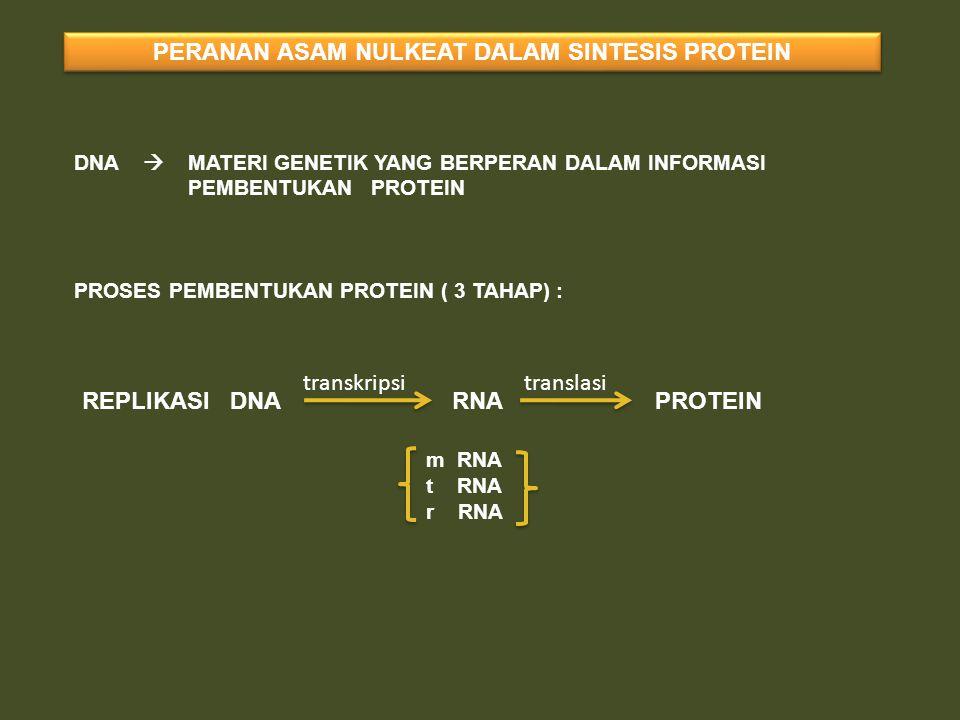 PERANAN ASAM NULKEAT DALAM SINTESIS PROTEIN DNA  MATERI GENETIK YANG BERPERAN DALAM INFORMASI PEMBENTUKAN PROTEIN PROSES PEMBENTUKAN PROTEIN ( 3 TAHA