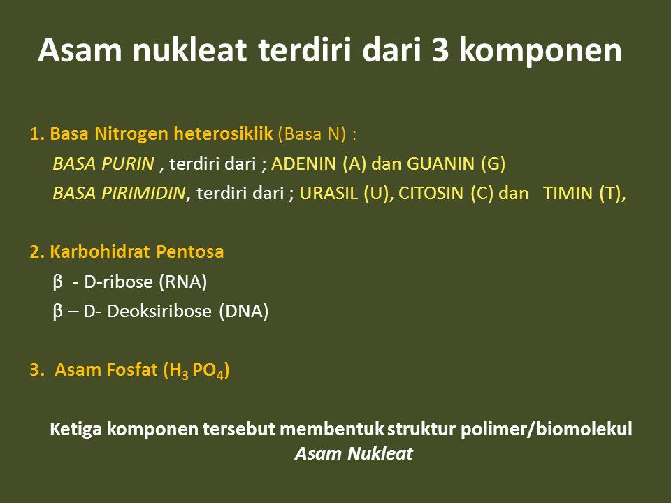 Asam nukleat terdiri dari 3 komponen 1. Basa Nitrogen heterosiklik (Basa N) : BASA PURIN, terdiri dari ; ADENIN (A) dan GUANIN (G) BASA PIRIMIDIN, ter