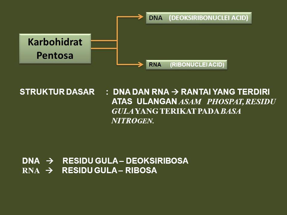 Karbohidrat Pentosa DNA (DEOKSIRIBONUCLEI ACID) RNA (RIBONUCLEI ACID) STRUKTUR DASAR : DNA DAN RNA  RANTAI YANG TERDIRI ATAS ULANGAN ASAM PHOSPAT, RE