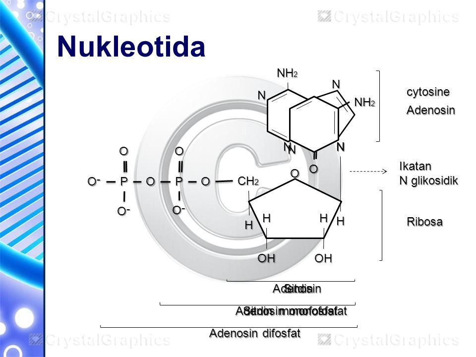 Nukleotida O CH 2 OH H H H OH H OPP O־O־O־O־ OO O־O־O־O־ O־O־O־O־O N N N N NH 2 Adenosin Ribosa Adenosin Adenosin monofosfat Adenosin difosfat Ikatan