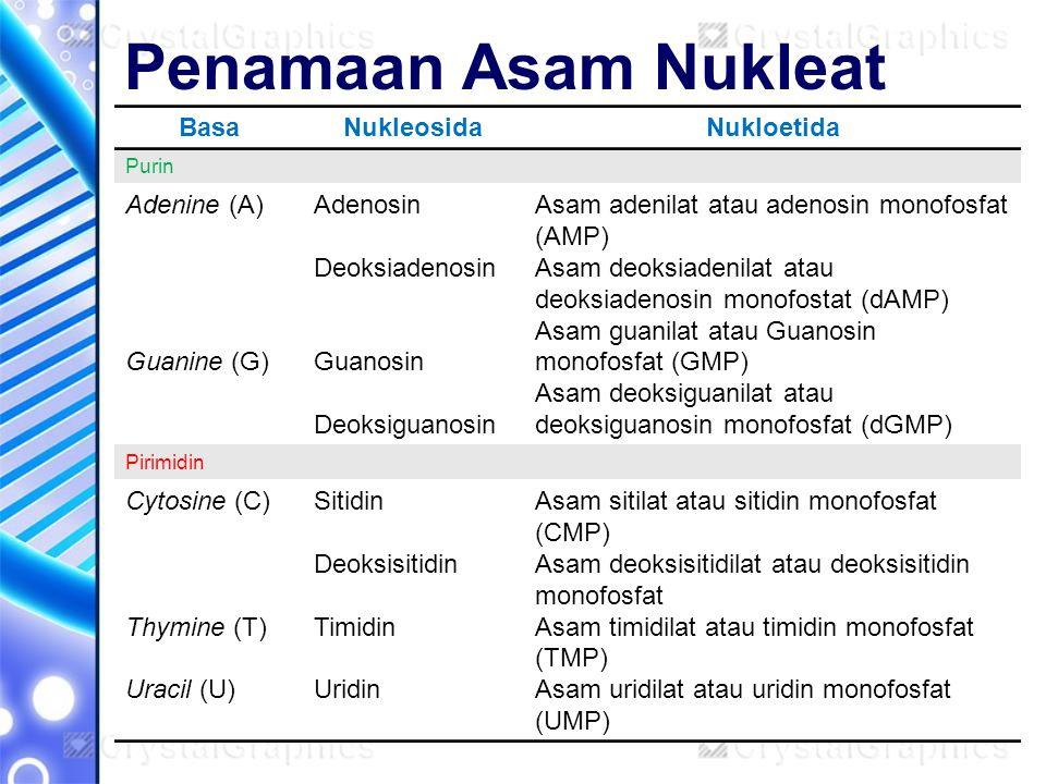 Penamaan Asam Nukleat BasaNukleosidaNukloetida Purin Adenine (A) Guanine (G) Adenosin Deoksiadenosin Guanosin Deoksiguanosin Asam adenilat atau adenos
