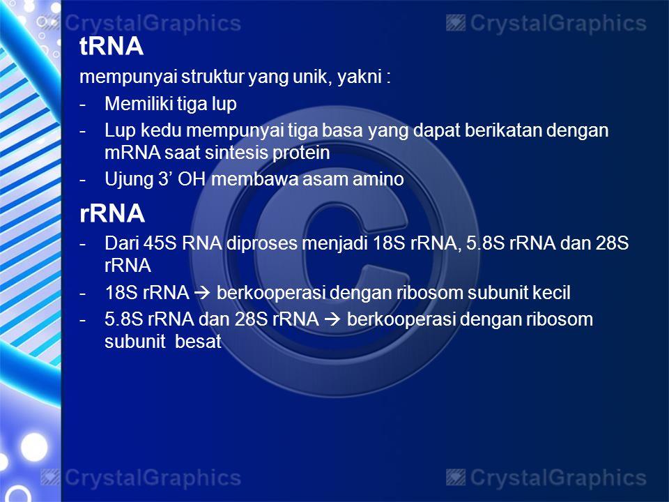 tRNA mempunyai struktur yang unik, yakni : -Memiliki tiga lup -Lup kedu mempunyai tiga basa yang dapat berikatan dengan mRNA saat sintesis protein -Uj