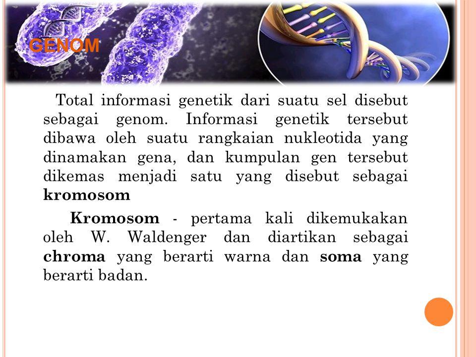 GENOM Total informasi genetik dari suatu sel disebut sebagai genom. Informasi genetik tersebut dibawa oleh suatu rangkaian nukleotida yang dinamakan g