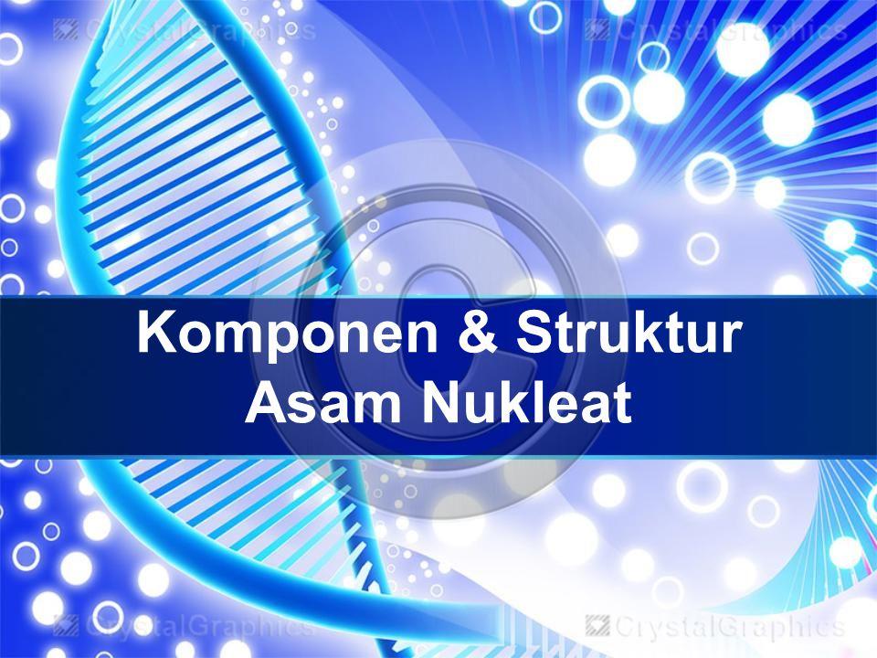 Komponen & Struktur Asam Nukleat